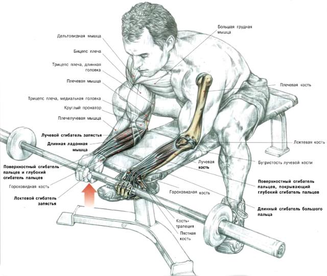 тренировка мышц рук картинках